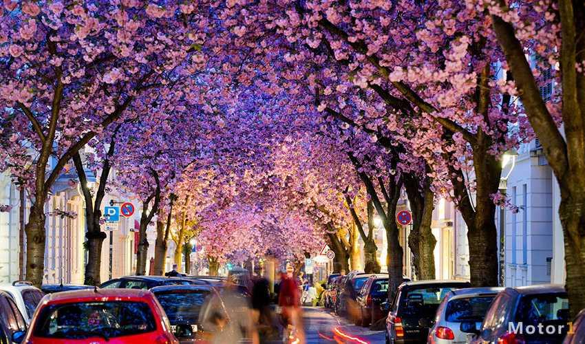 خیابان شکوفه گیلاس بُن آلمان